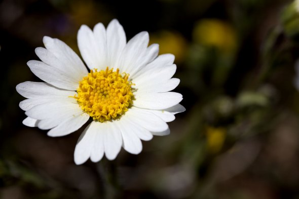 Used a tripod and waited for the wind to stop for a sharp focus on flower.