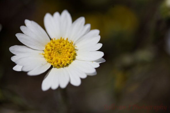 Used tripod and cable release for a sharp focus on flower.
